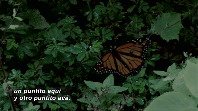 Still image from Bios: Nature and Society--The Wings of the Sun, Temperate Forests (Spanish)