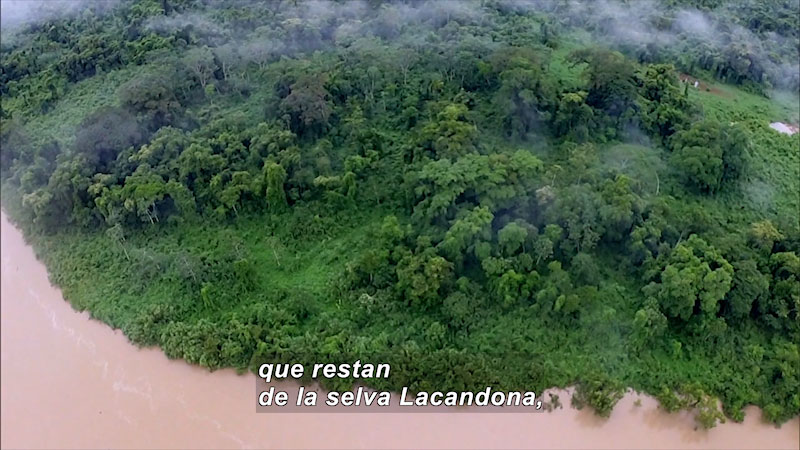 Still image from Bios: Nature and Society--Heart of the Mountain, The Lacandon Jungle (Spanish)