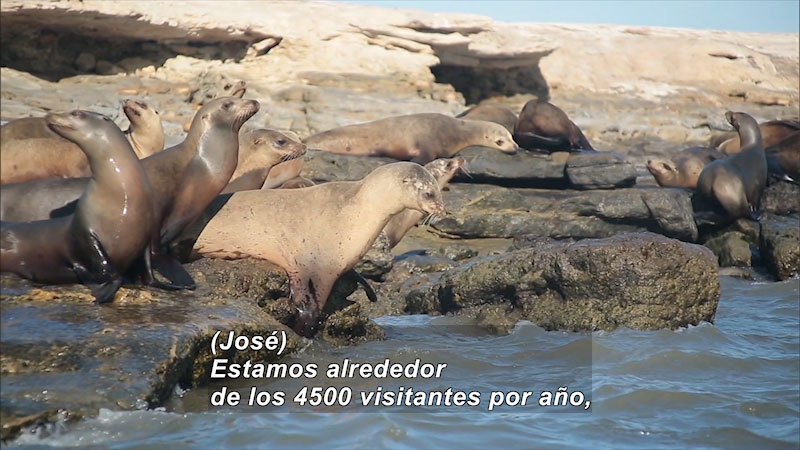Still image from Bios: Nature and Society--Sanctuary of Giants, North Pacific (Spanish)