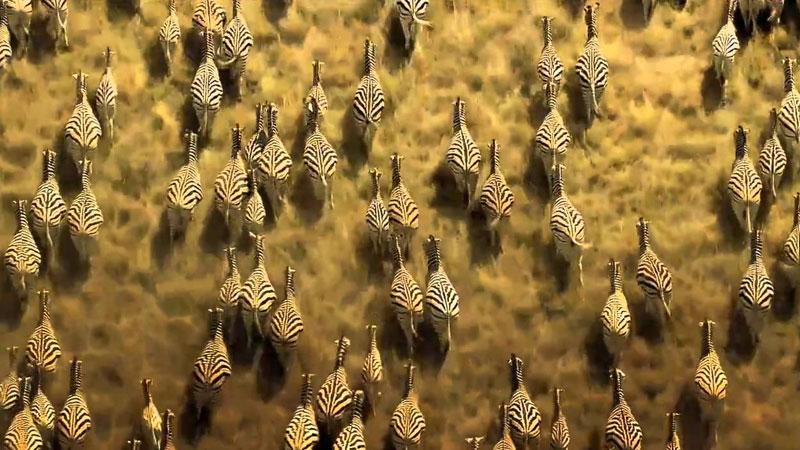 Still image from Animal Migration