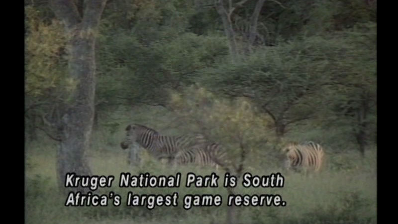 Still image from South Africa: A Land Apart