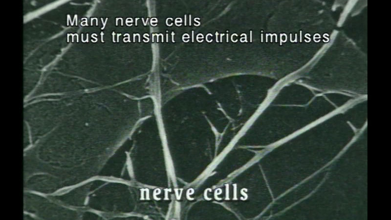 Still image from Cells And Tissues