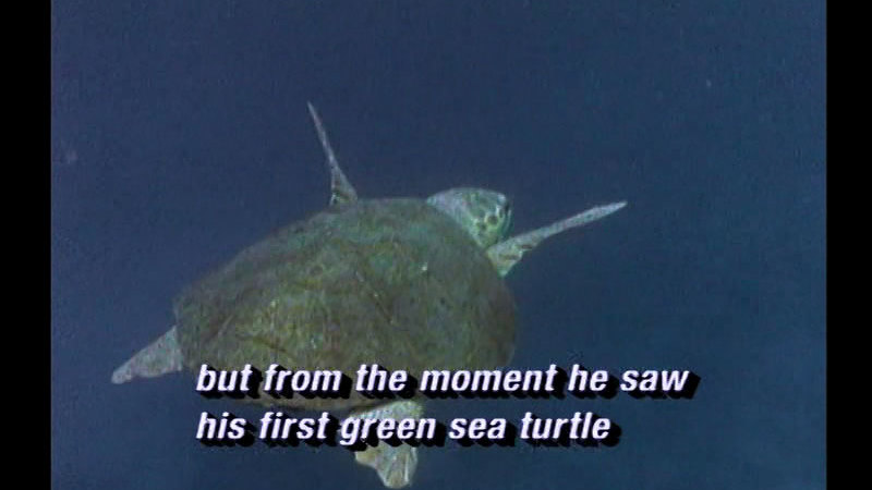 Still image from Giant Sea Turtles