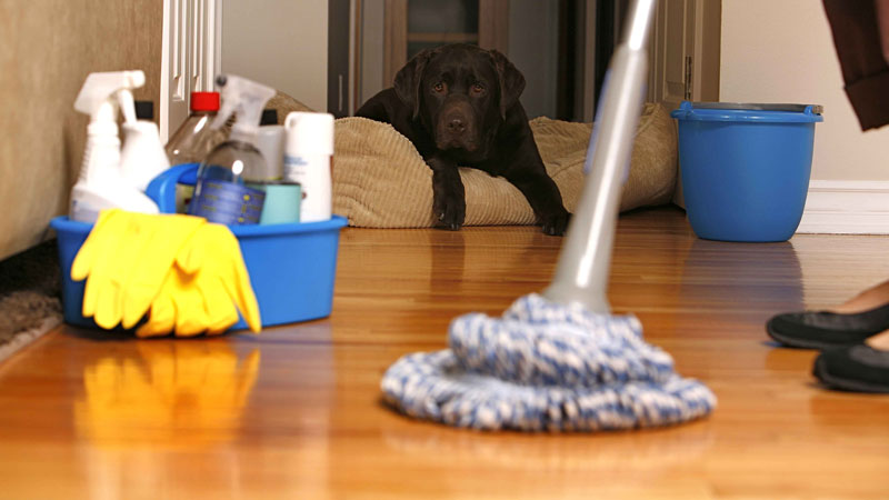 Still image from How To Clean A House