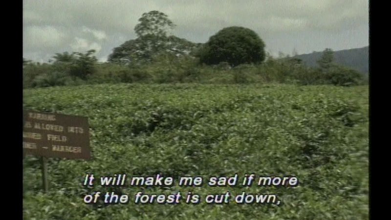 Still image from Cameroon: Africa's Child: My Rainforest