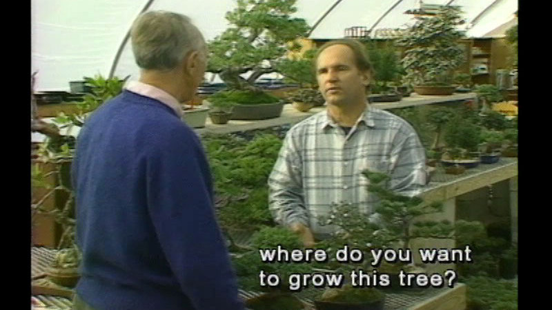 Still image from The Good Green Earth: Bonsai