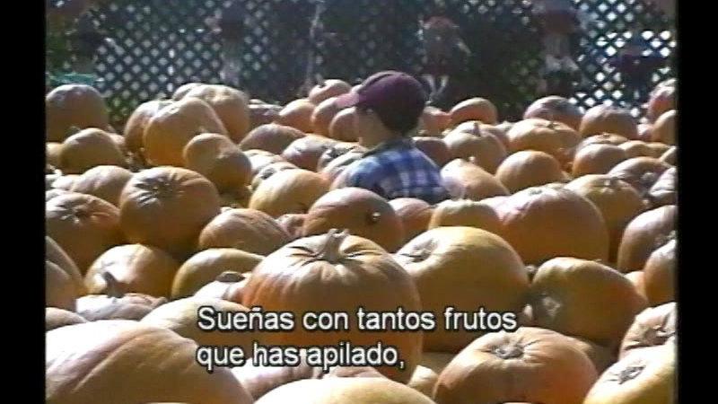 Still image from Pumpkin Circle  (Spanish)