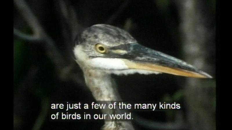 Still image from Birds, Revised