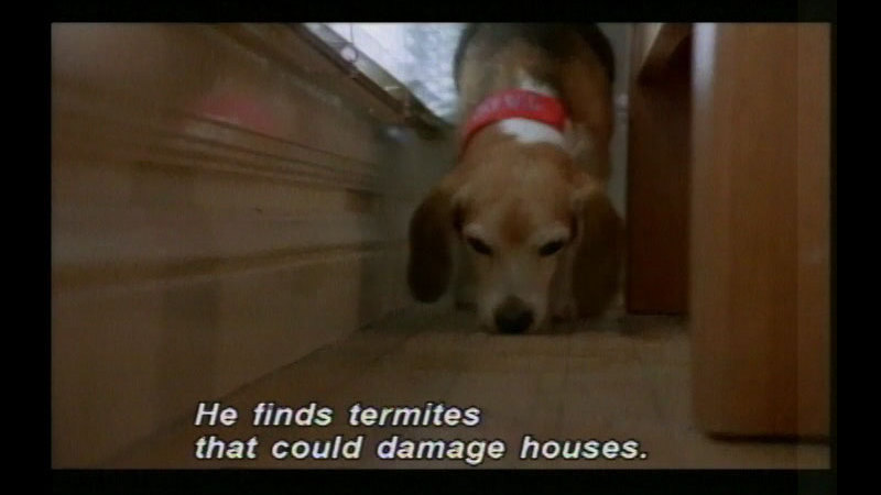 Still image from Dogs & Cats