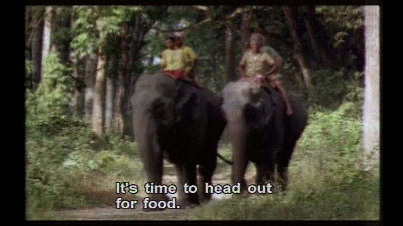 Still image from Asian Elephants