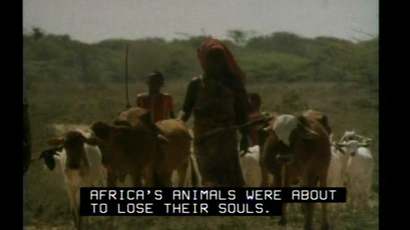 Still image from The Africans: A Triple Legacy--The Nature Of A Continent