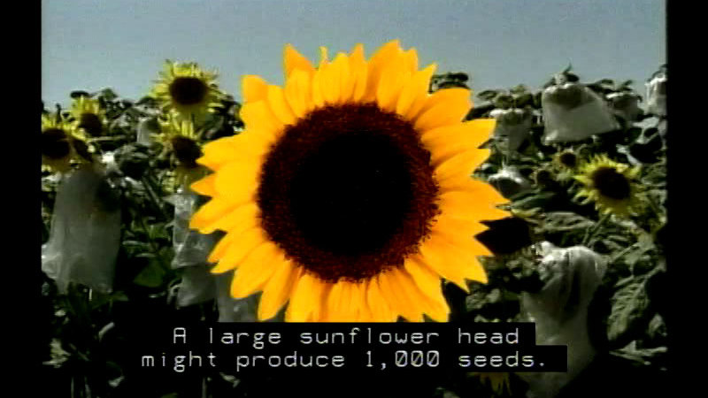 Still image from Flowers