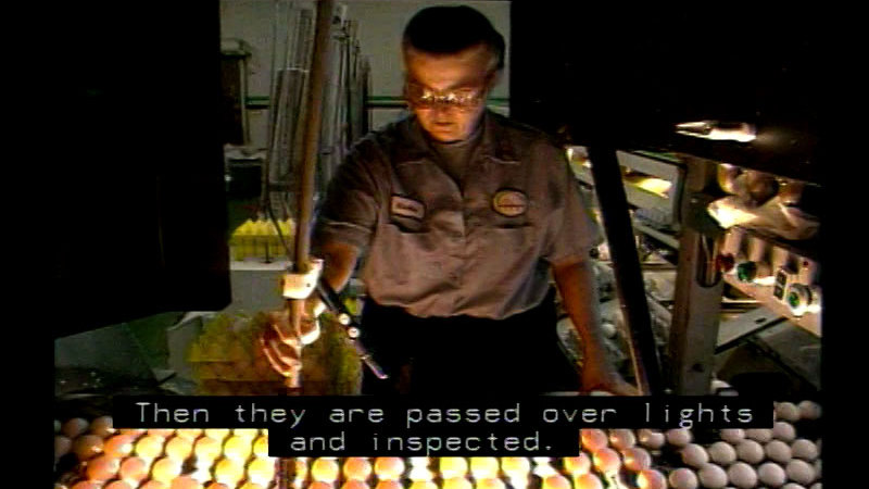 Still image from Poultry