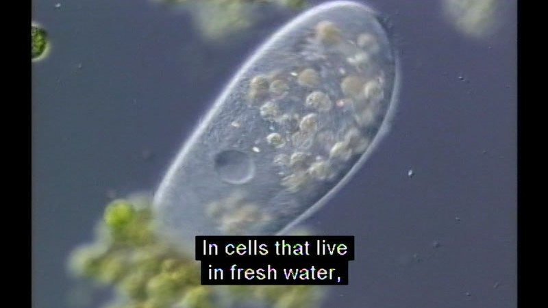 Still image from Paramecium
