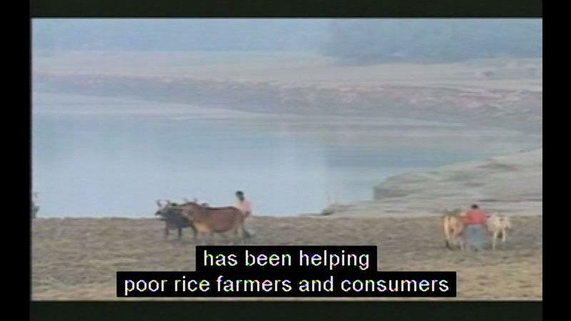 Still image from Rice Science For A Better World