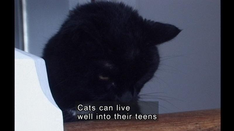 Still image from My Kitten