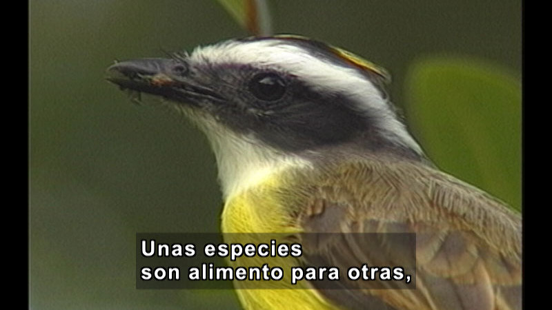 Still image from Animal Studies: Strategies For Survival 1 (Spanish)
