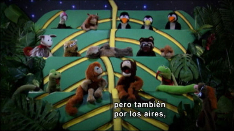 Still image from The Parakeet Show – Standards (Spanish)