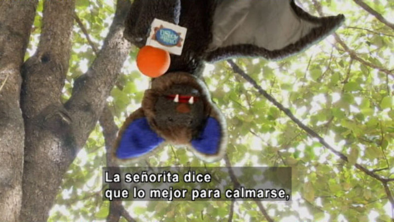 Still image from The Parakeet Show- Anger Management (Spanish)