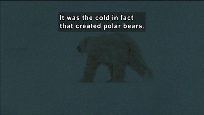 polar bear and climate change pdf