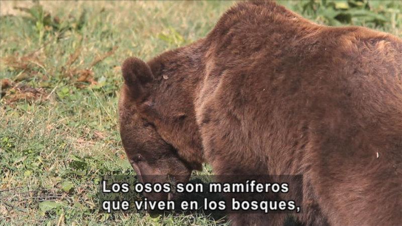 Still image from Science Video Vocab: Omnivore (Spanish)
