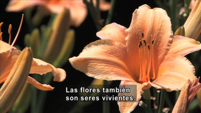 Still image from Science Video Vocab: Living (Spanish)