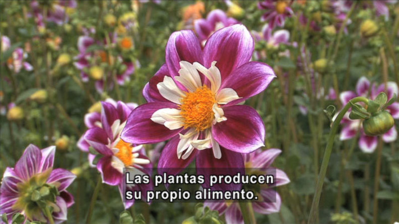 Still image from Science Video Vocab: Producer (Spanish)