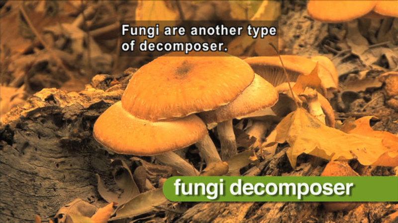science video vocab  decomposer