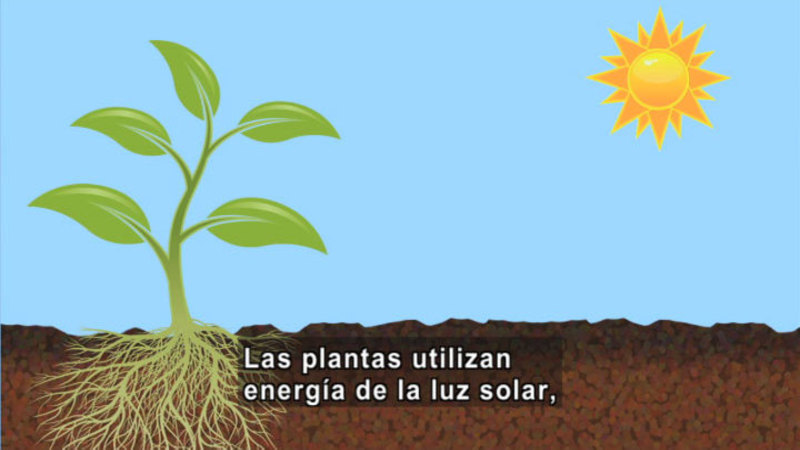 Still image from Science Video Vocab: Food Chain (Spanish)