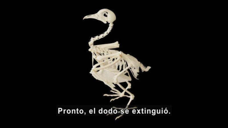 Still image from Science Video Vocab: Extinct (Spanish)