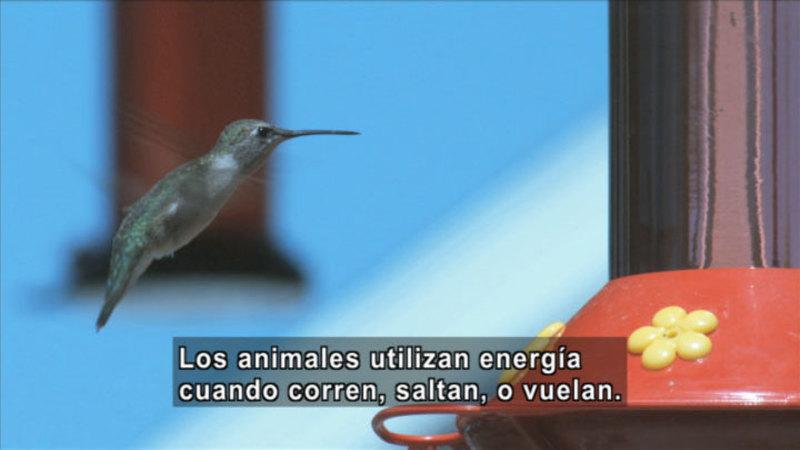 Still image from Science Video Vocab: Consumer (Spanish)