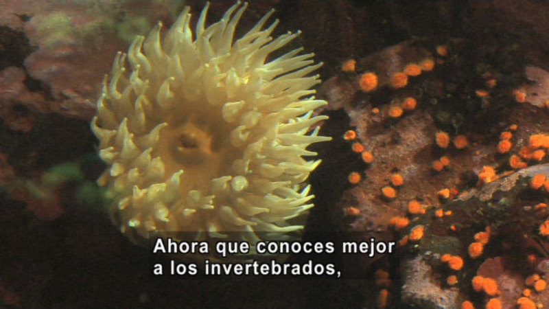 Still image from Science Video Vocab: Invertebrate (Spanish)
