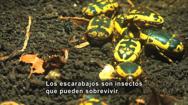 Still image from Science Video Vocab: Insect (Spanish)