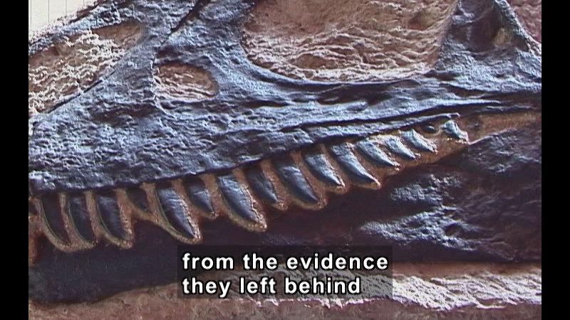Still image from Exploring Fossils