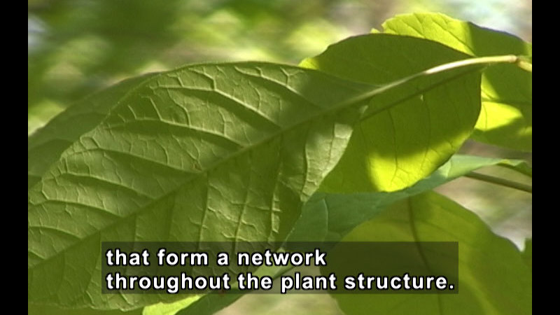 Still image from Investigating Simple Plants