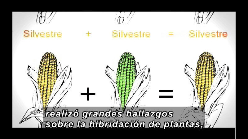 Still image from Science And Technology - Biotechnology Part 1 (Spanish)