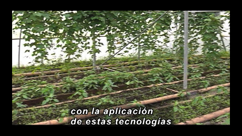 Still image from Science And Technology - Biotechnology Part 2 (Spanish)