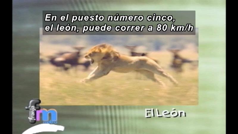 Still image from Franja Metro: Fast Animals (Spanish)
