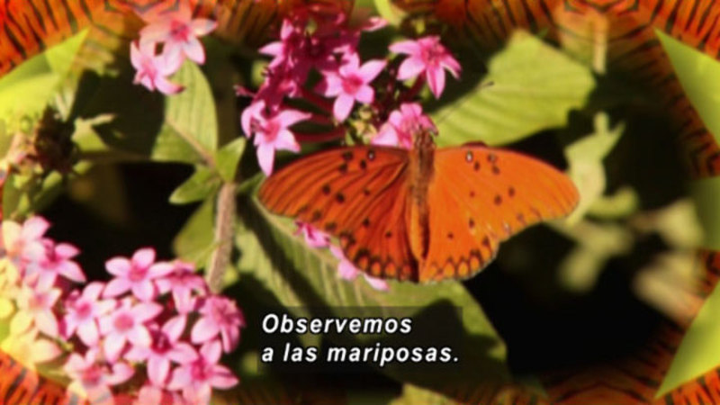 Still image from Animapaka: Butterfly (Spanish)