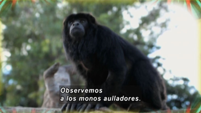 Still image from Animapaka: Monkey (Spanish)