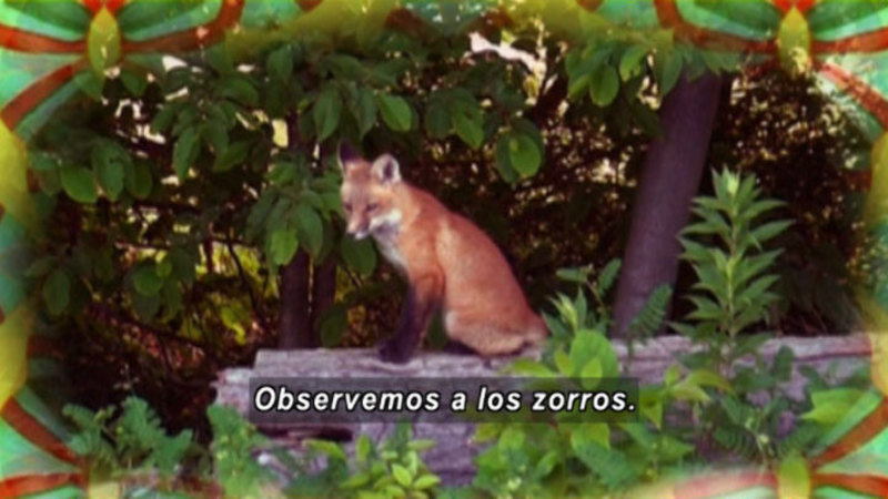 Still image from Animapaka: Fox (Spanish)