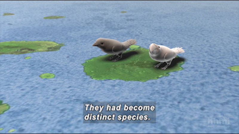 Still image from The Origin Of Species: The Beak Of The Finch
