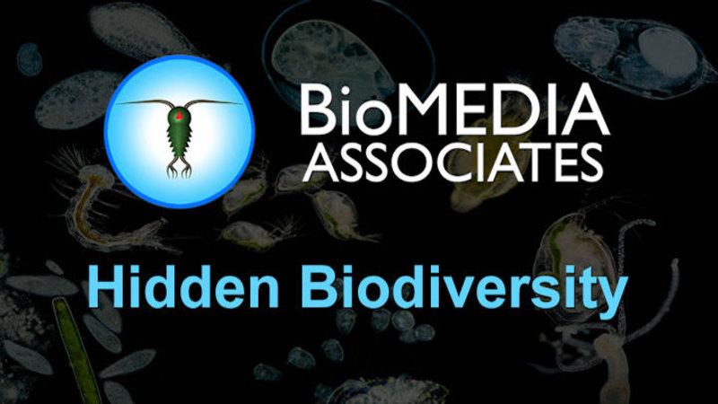 Still image from Hidden Biodiversity