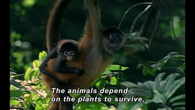 Still image from Wild Chronicles: Costa Rican Forests