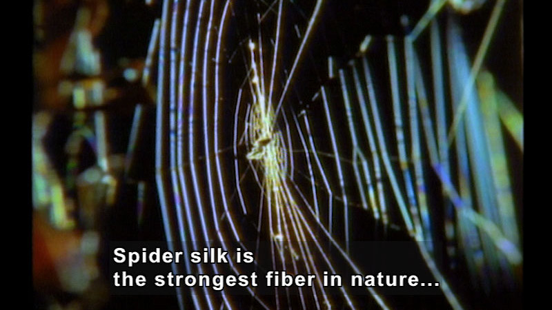 Still image from Wild Chronicles: Spiders