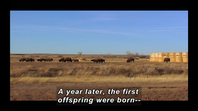 Still image from Wild Chronicles: American Prairie Reserve, MT