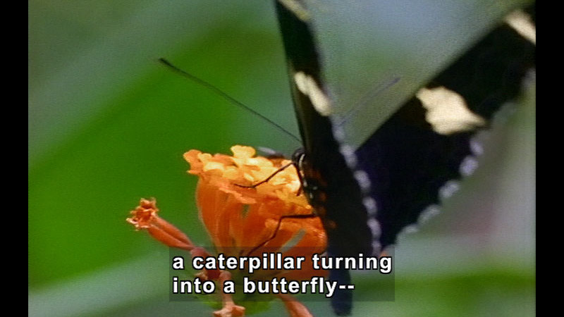 Still image from Wild Chronicles: Caterpillar Metamorphosis