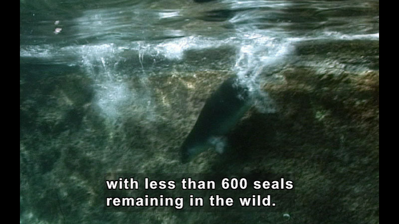 Still image from Wild Chronicles: Mediterranean Monk Seal Rescue