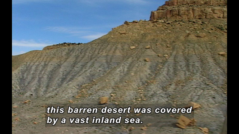Still image from Wild Chronicles: Marine Animal Fossils In The Desert