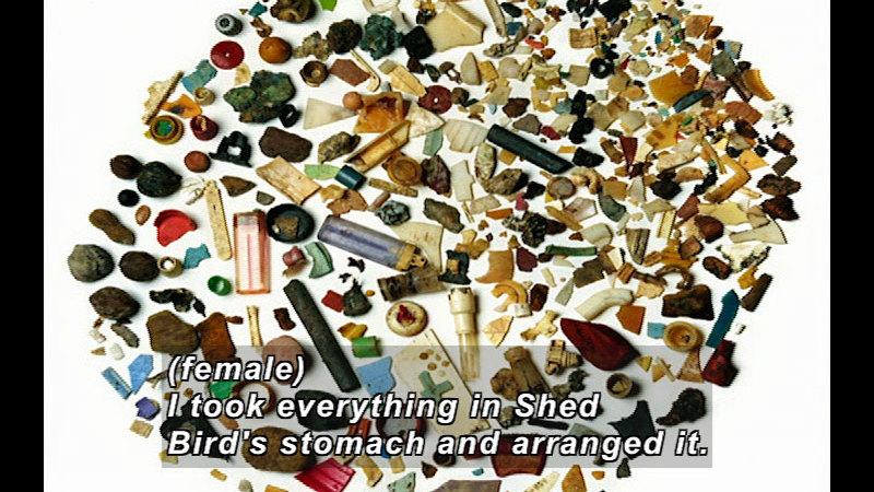 Still image from Wild Chronicles: Impact of Plastic On Hawaiian Wildlife